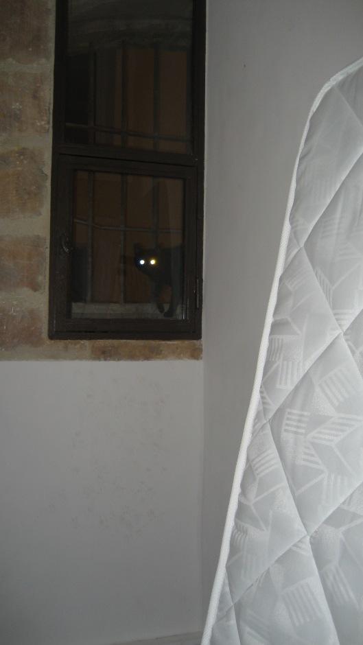 Provence, June 2009 063